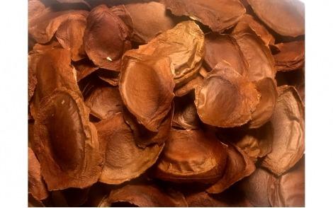 Sementes-frescas-de-Mógno-Africano-Ivorensis