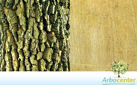 Sementes de Tamanqueiro (Aegiphila sellowiana)