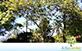 Sementes de Goiaba Vermelha (Psidium guajava L.)