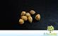 Palmeira Guarivá Syagrus x teixeiriana Glassman