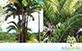 Sementes de Palmeira Pupunha sem espinho (Bactris gasipaes)