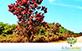 Sementes de Pau Formiga (Triplaris americana)