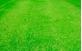 Campo elaborado com grama batatais
