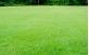 Gramado para proteção de invasoras elaborado com grama batatais